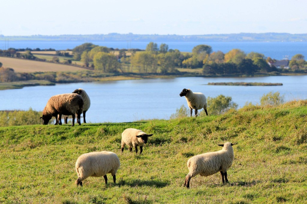 Alt er vand ved siden af Ærø , Påske , får , Ærø , Søbygaard , udsigt , Vitsø , sø