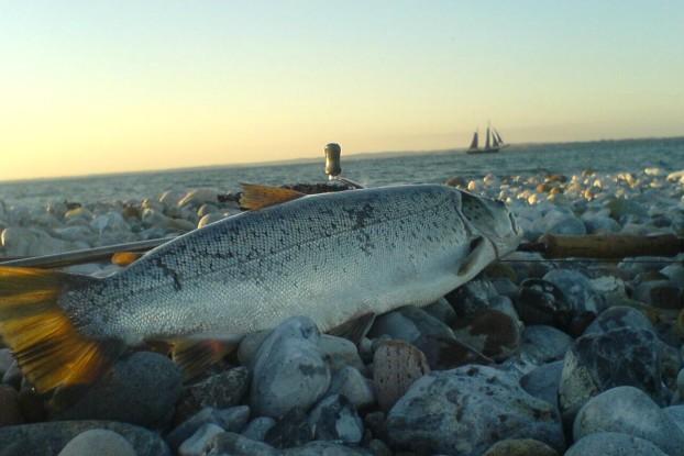 Uanset vind og vejr, kan du altid finde en god fiskeplads på Ærø. Ærø er en ø omgivet af godt fiskevand. Af de 80 km kystlinie er hele 60 km særligt godt til havørredfiskeri. Ærø er året rundt en fiskeperle. Havørred fangst.