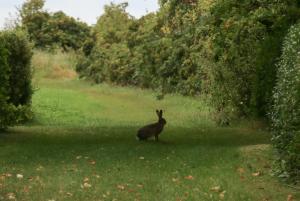 Haren er overalt på Birkholm